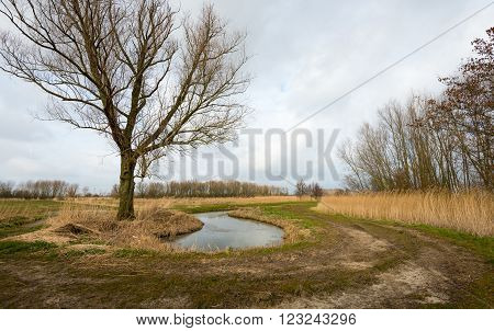 Picturesque Dutch rural polder landscape with a bare tree and a small stream in the foreground. It's a cloudy day at the end of the winter season.