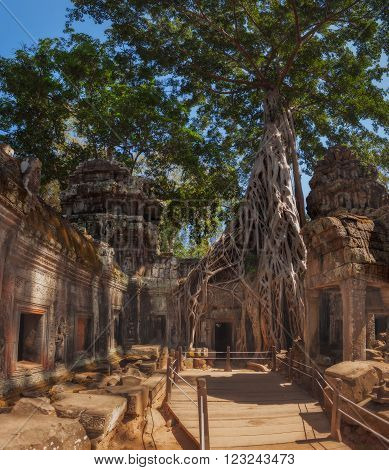 SIEM REAP, CAMBODIA. December 16, 2011. Panorama of ancient stone door and tree roots, Ta Prohm temple ruins, Angkor Thom
