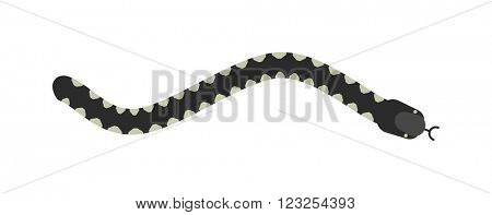 Vector flat snake isolated on white background. Vector snake flat style. Flat snake skin pattern. Poisonous snake vector icon