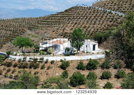 Country farm surrounded by orchards of mango trees in the Axarquia region Velez Malaga Costa del Sol Malaga Province Andalusia Spain Western Europe.