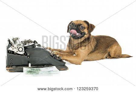 dog typewriter on a white background in studio