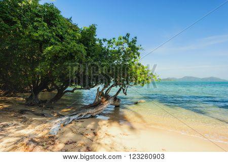 Trees and beach at Koh Chang Island,Thailand