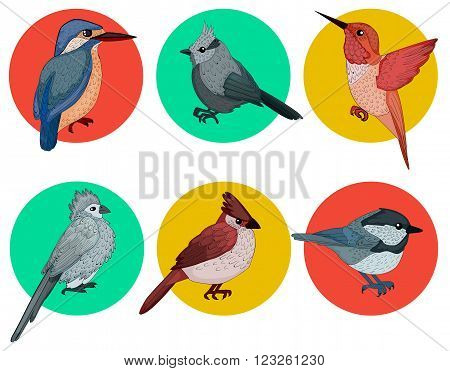 Colorful Birds. Different Birds. Set of Birds. Hand Drawn. Vector illustration