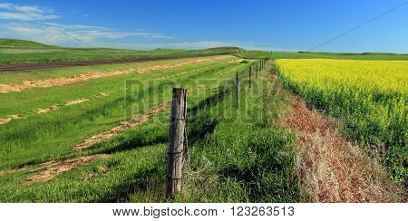 North Dakota USA Prairie Canola Farm Fields ND