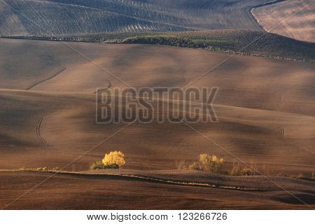 Italy, Val d'Orcia - Nov 02 : The fields of the valley Val d'Orcia on November 02, 2015 in Val d'Orcia, Italy