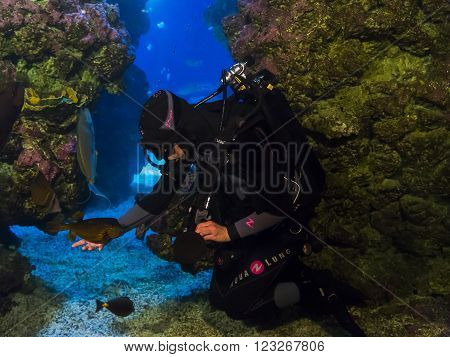 Monaco, Monaco - May 21: There are cleaning the aquarium with fish and game diver at the Museum of Oceanography May 21, 2015 in Monaco, Monaco.