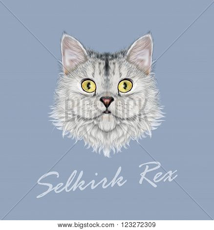 Cute face of cute domestic cat on blue background.