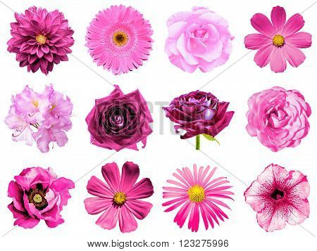 Mix collage of natural and surreal pink flowers 12 in 1: peony, dahlia, primula, aster, daisy, rose, gerbera, clove, chrysanthemum, cornflower, flax, pelargonium isolated on white