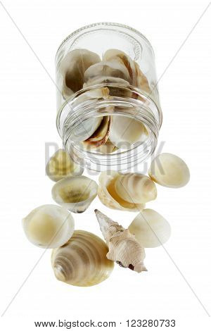 Seashells  Spilling Out of Glass Jar on White background