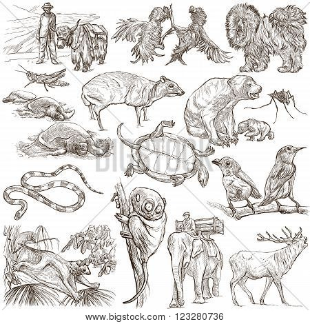 ANIMALS around the World - pack collection - Collection of an hand drawn illustrations. Description Full sized hand drawn illustrations (freehand sketches). Drawings on white background.