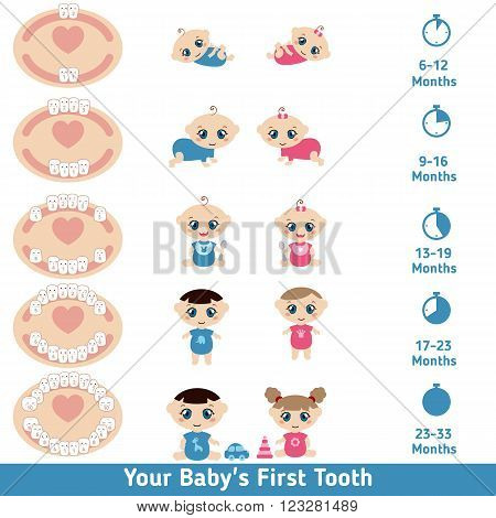 Vectors Illustration of Temporary Teeth Primary Eruption. Jaw with teeth, baby girl and baby boy on white background.