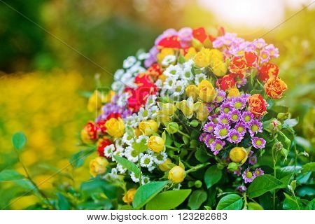 bouquet of mini roses and daisies on nature