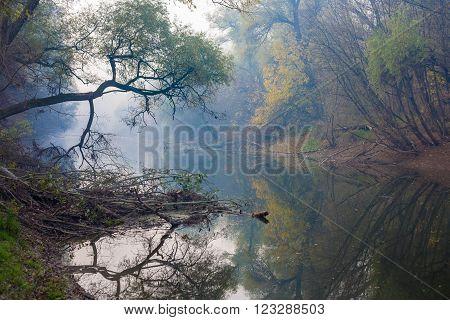 A  beautiful Autumnal foliage over a backwater