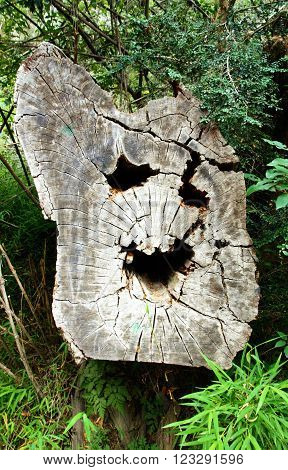 Close up of a tree trunk which looks like a smiling face