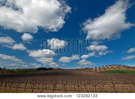 Paso Robles Wine Country Scenery in Central California USA