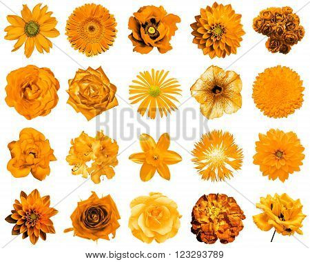 Mix Collage Of Natural And Surreal Orange Flowers 20 In 1: Peony, Dahlia, Primula, Aster, Daisy, Ros