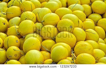Melon fruit after harvest, with hundreds of golden melons were loaded onto boats to carry away customer communication, this is typical of trading streak fruit Vietnam waterways
