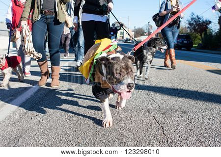 ATLANTA, GA - DECEMBER 5 2015:  A dog wearing a hamburger costume walks in a dog costume parade in Atlanta, GA on December 5, 2015 .