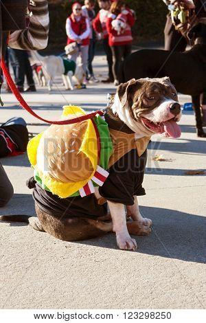 ATLANTA, GA - DECEMBER 5 2015:  A dog wearing a hamburger costume sits after walking in a dog costume parade in Atlanta, GA on December 5, 2015 .