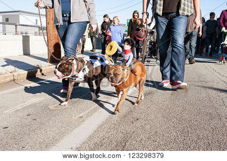 ATLANTA, GA - DECEMBER  5 2015:  Dogs wearing costumes walk in a dog costume parade in Atlanta, GA on December 5, 2015.