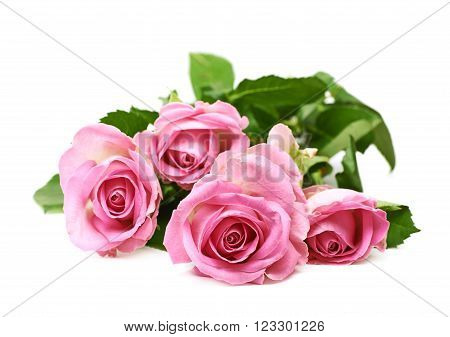 Pile of pink roses isolated over the white background