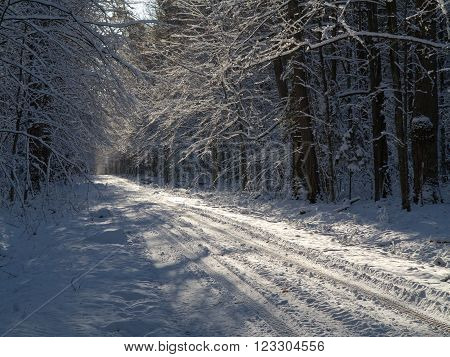 Ground road snow covered crossing deciduous stand of Bialowieza Forest,Poland,Europe