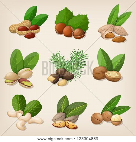 Set of vector various nuts. Vector illustration EPS 10