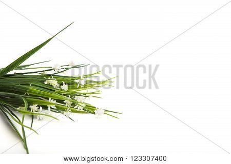White Wild Flowers Isolated On White Background
