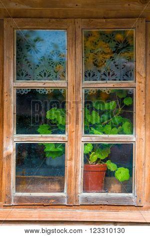 Geranium Flower On A Windowsill In A Village House