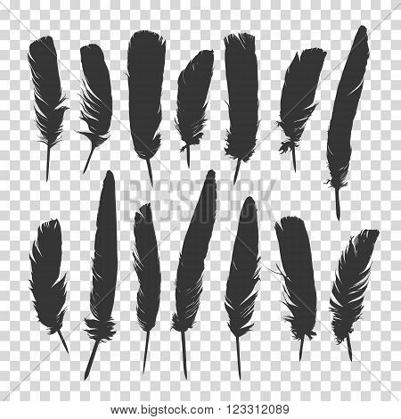 Hand drawn feathers set. Feathers set. Black  feathers set. Vector  feathers set.