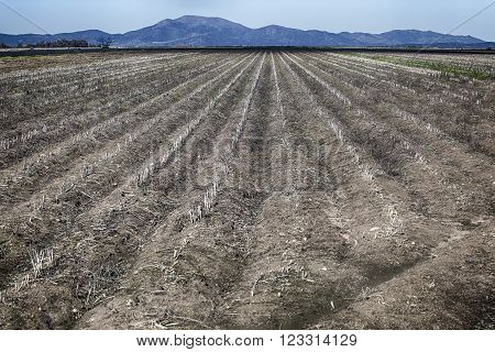 Cereals fallow land fields at Guadiana River Meadows Badajoz Spain