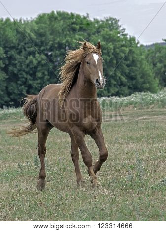 a young stallion download on the forest edge