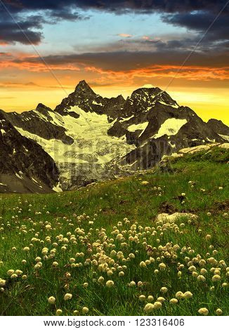 Beautiful mountain Gabelhorn in the foreground blooming cotton grass, Pennine Alps, Switzerland