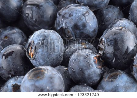 Background image of blueberries