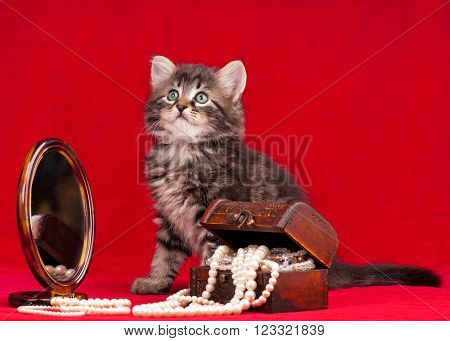Cute kitten and a chest with pearls near the mirror over red background