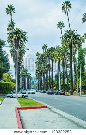 Los Angeles, CA, USA - January 16, 2016: Palm trees at Beverly Gardens Park. Fashion, travel, summer, vacation and tropical beach concept.