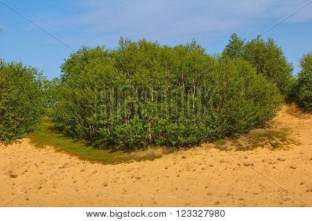 Green Dune: Planting Forests Is Fixed Sands And Create Pleasant Landscape