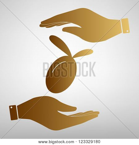 Oliva sign. Save or protect symbol by hands. Golden Effect.