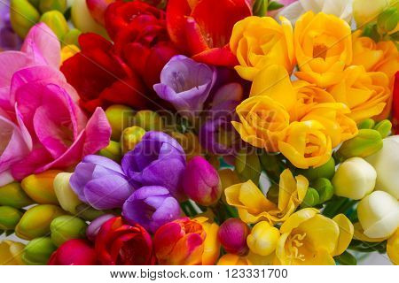 Bunch of fresh freesia flowers close up macro