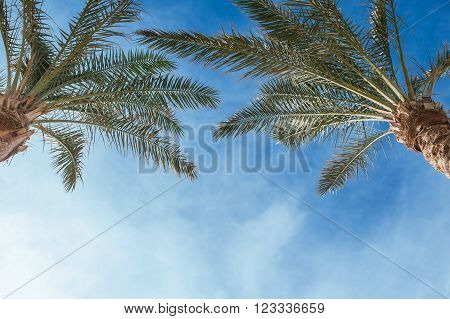 Two palm treetops against a sunny sky.
