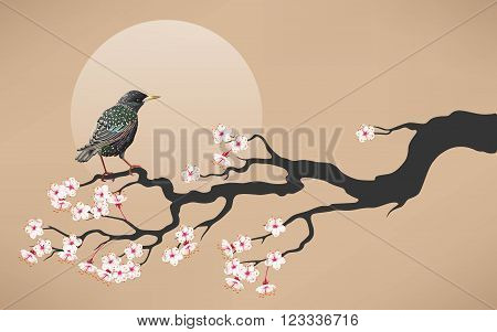 Vector illustration of branch of blooming cherry blossoms with starling.