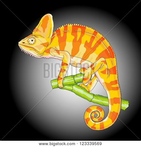 yellow chameleon on a branch isolated black background vector illustration