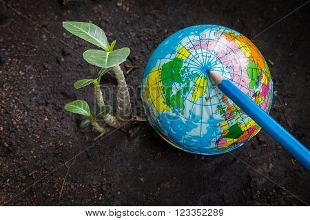 Photo of world and small tree together
