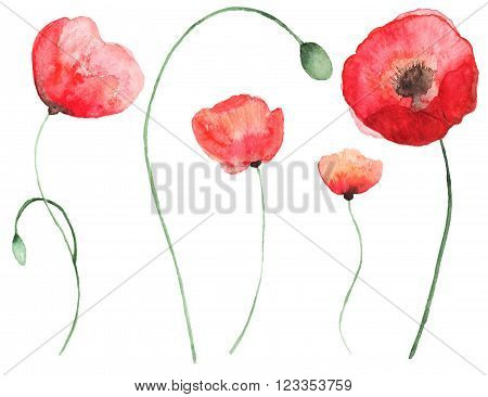Collection of  watercolor poppy flowers. Set of beautiful watercolor poppy on white background. Perfect for wedding invitations, greeting cards, quotes, blogs, posters and DIY.
