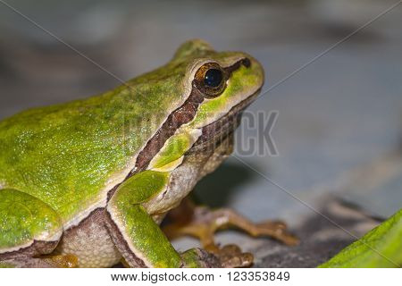 Green sitting frog looks at the sky