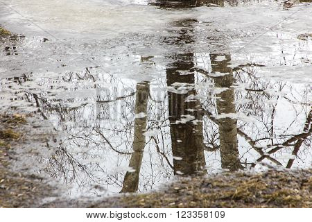 spring background maple reflected in melt water in shades of gray ** Note: Soft Focus at 100%, best at smaller sizes