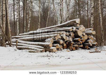 Aspen logs in the logging at winter ** Note: Soft Focus at 100%, best at smaller sizes