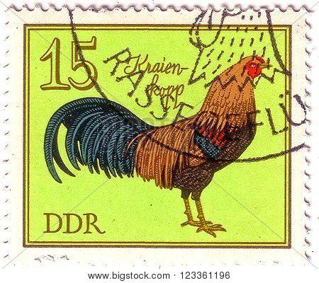 Gdr - Circa 1979: A Stamp Printed In Gdr (eastern Germany) Shows Kraien-kopp Cock, Series