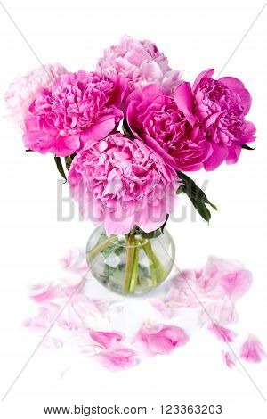 pink peony in glass vase . Flower