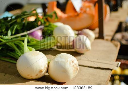 White fresh turnips on display at the farmers market